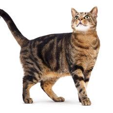 cat-adult-landing-hero