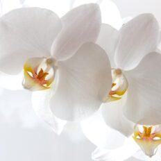 Orhideede jt. taimede putukatõrje